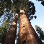 USA 2019 : roadtrip californien : mardi 12 novembre, Sequoia park